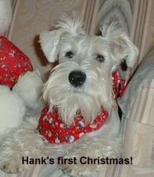 Hank`s First Christmas